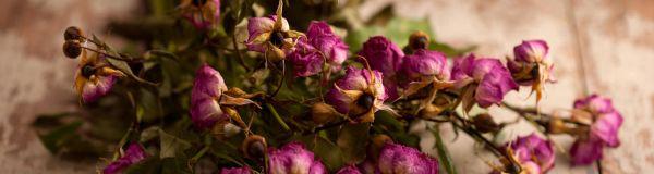 Essiccatore fiori secchi